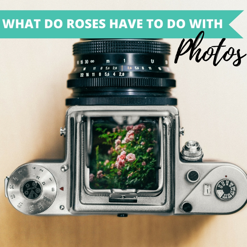2017-04-24 What do roses have to do with photos